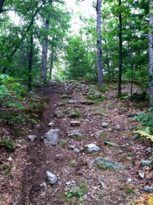 My new neighborhood trails at the Middlesex Fells Reservation.